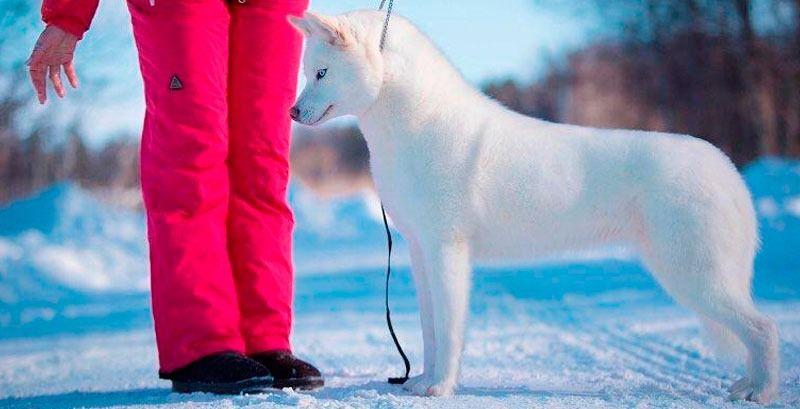 Mitos de la educación canina negativa