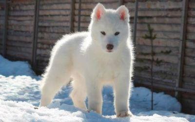¿Cómo preparar a tu perro para el invierno?