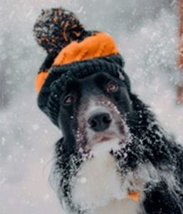 Perro con su gorrito para la nieve