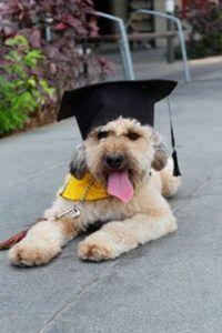Un perro matriculado