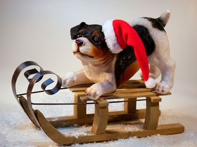 Perro sobre trineo