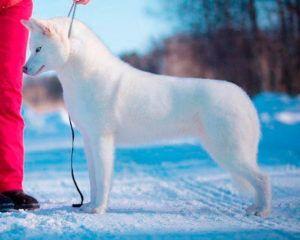 Severnaya Luna Pervyi Sneg