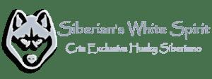 Siberian's White Spirit - Cría exclusiva de Husky Siberiano