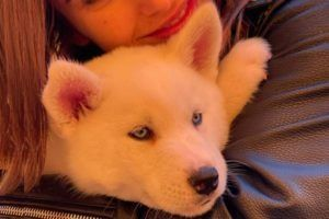 Cachorro Husky pequeño ojos azules
