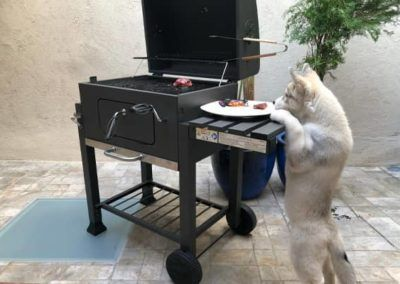 cachorro husky siberiano barbacoa