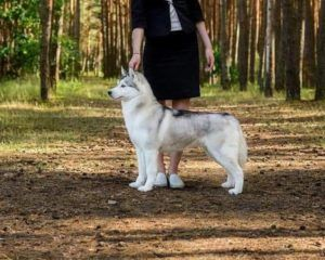 Svobodnaya Staya Yuliana Kukla bosque