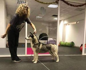 Husky infinity challenge entrenando
